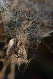 在蜘蛛被子 免版税库存照片