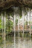 在蝴蝶房子的瀑布 Mainau海岛 德国 免版税库存照片