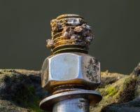 在螺栓的海洋蜗牛 免版税图库摄影
