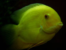 在蠕虫的鱼 免版税图库摄影