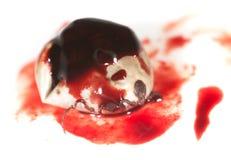 在血液的小蜘蛛在白色背景 宏指令 免版税库存照片