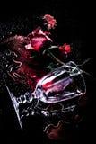 在血液的红色玫瑰 图库摄影