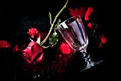 在血液的红色玫瑰 库存照片