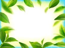 在行动的绿色茶叶在天空背景 库存图片