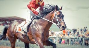 在行动的赛马画象 免版税库存照片