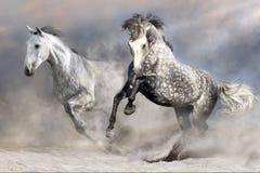 在行动的马牧群 图库摄影