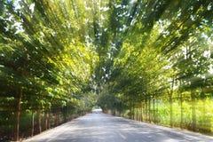 在行动速度的路在森林公路弄脏了隧道效应或视觉隧道现象的背景概念 免版税库存照片