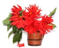 在行动隔绝的一个陶瓷花瓶的红色大丽花 图库摄影
