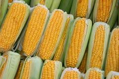 在行堆积的新鲜的甜玉米 库存图片