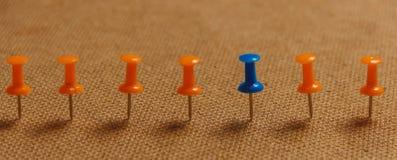 在行用桔子,区别的,个性,领导概念的固定式,蓝色图钉 复制空间 钞票 库存图片