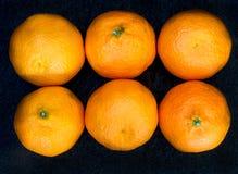 在行的六棵柑桔 免版税库存照片