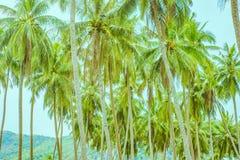 在行的许多棕榈树 免版税库存图片