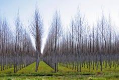 在行,冬天的树 免版税图库摄影