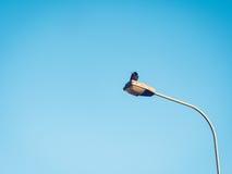 在街灯的白嘴鸦反对清楚的蓝天 免版税图库摄影