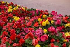 在街道上增长的明亮的花 库存照片