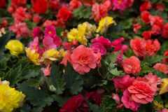 在街道上增长的明亮的花 图库摄影