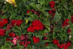 在街道上增长的明亮的花 库存图片