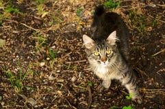 在街道上放弃的好奇离群猫 免版税库存图片