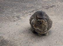 在街道上的一只无家可归的棕色猫 免版税库存图片