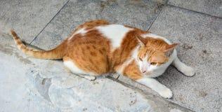 在街道上的一只猫在广宁省,越南 免版税库存图片