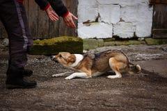 在街道上的一条害怕无家可归的狗 库存照片