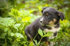 在街道上的一条害怕无家可归的狗 免版税库存图片