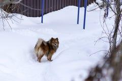 在街道上的一条狗在冬天 免版税库存图片