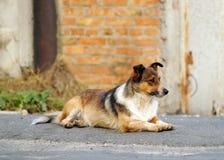 在街道上的一点红头发人逗人喜爱的狗 免版税库存图片