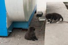 在街道上的两只无家可归的小猫 免版税库存照片