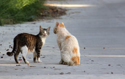 在街道上的两只离群猫 库存照片