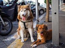 在街道上的两条逗人喜爱的狗 图库摄影
