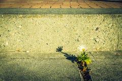 在街道上的偏僻的花 免版税库存照片