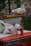 在街道上的兔子展示 免版税库存图片