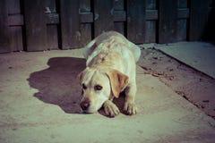 在街道上的哀伤的看的狗在灯笼光 免版税图库摄影