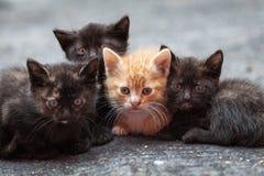 在街道上的四只肮脏的小猫 免版税库存图片