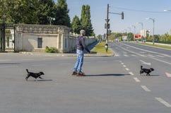 在街道上的四轮溜冰者 库存图片