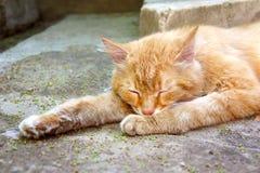 在街道上的姜猫在沥青 库存图片