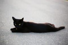 在街道上的无家可归的猫 库存照片