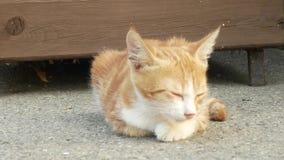 在街道上的无家可归的红色小猫 逗人喜爱的猫面孔 4K 股票视频