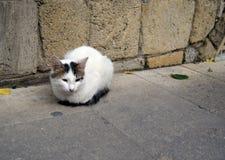 在街道上的猫 免版税图库摄影