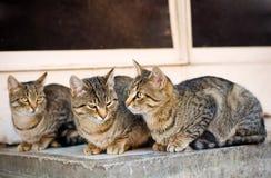 在街道上的猫 免版税库存照片