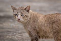 在街道上的猫 图库摄影