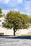 在街道上的美丽的绿色树 库存照片