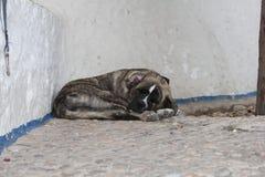 在街道上的老睡觉狗 免版税库存图片