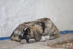 在街道上的老睡觉狗 免版税库存照片