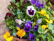 在街道上的装饰鲜花在维罗纳市 库存图片