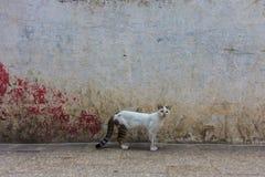 在街道上的镶边宠物猫 免版税图库摄影