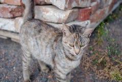 在街道上的镶边猫,街道猫 免版税库存图片