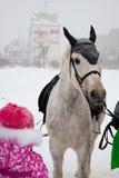 在街道上的马在冬天 免版税库存图片