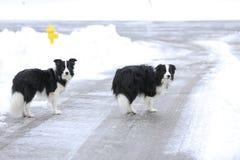 在街道丢失的两条狗 库存图片
